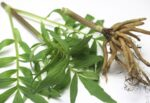 Valerian extract New Zeland